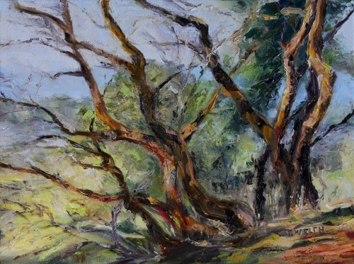 Arbutus on Mt. Park 12 x 16 inch oil on canvas by Terrill Welch 2013_10_26 059