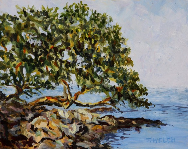 Arbutus tree  in ray of sun 8 x 10 inch acrylic painting sketch on gessoboard by Terrill Welch 2015_02_01 057
