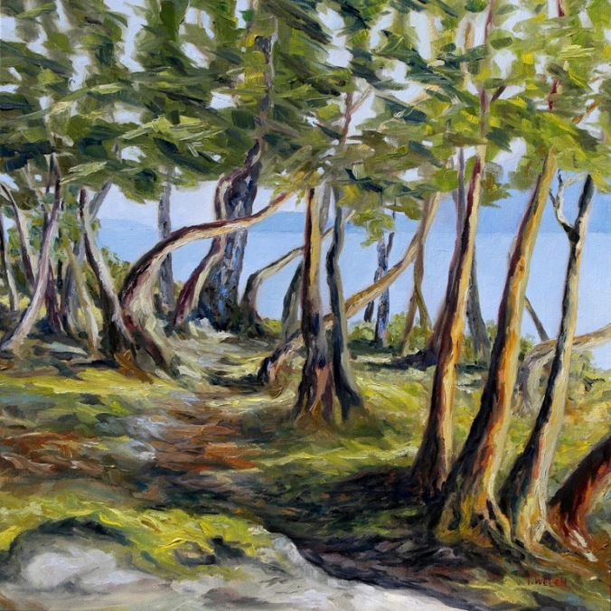 TRAIL IN THE ARBUTUS TREES 24 x 24 inch oil on canvas by Terrill Welch 2015_01_01 246
